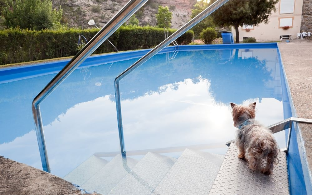 Dog-Pool-Ramps